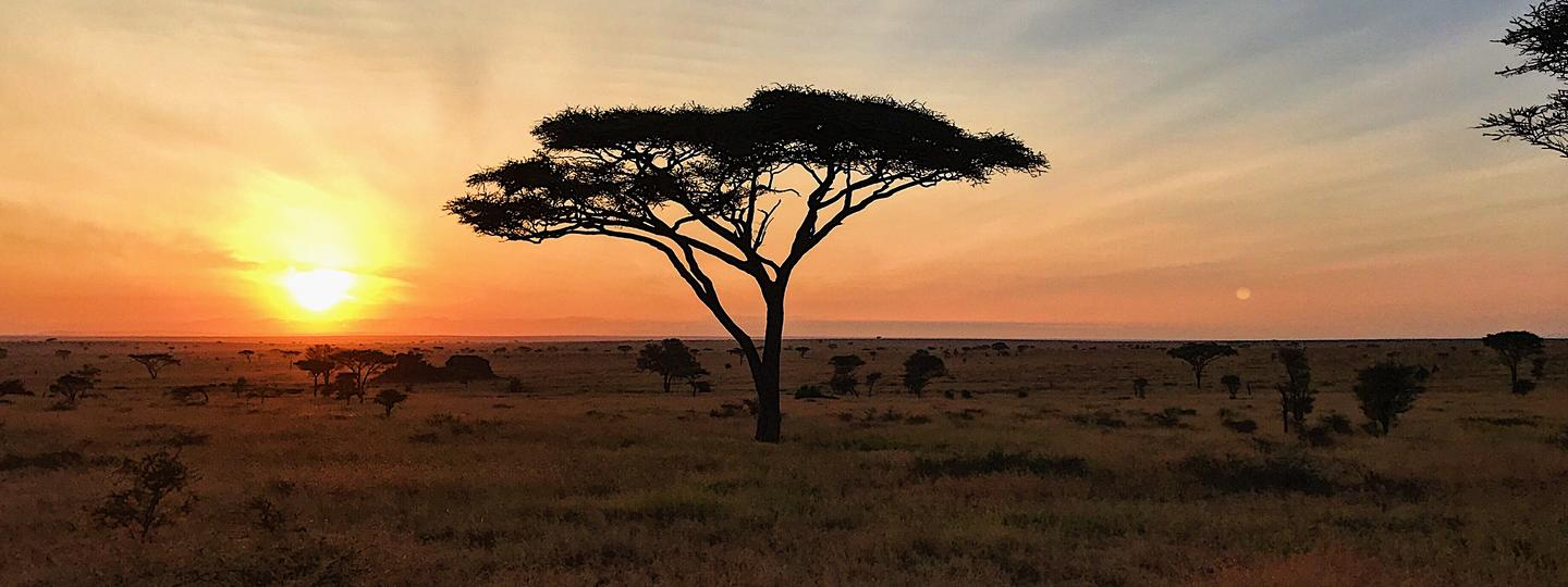 Tree at sunset in Tanzania