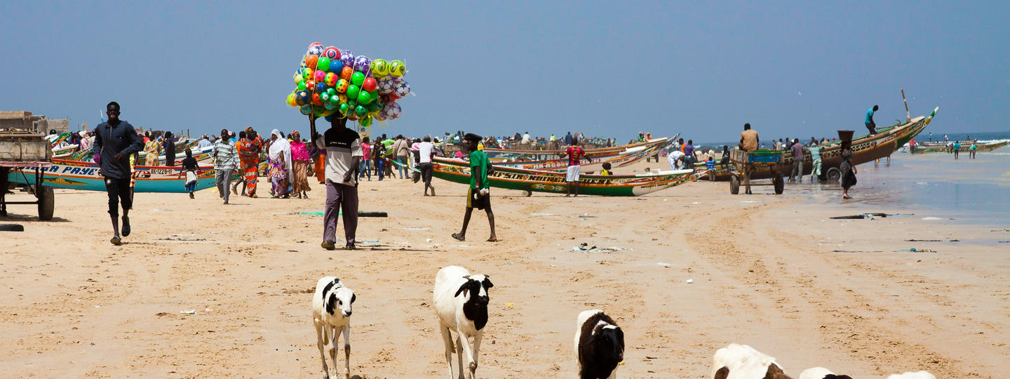 People and cows on a beach with boats